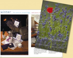 Purple Haze Lavender catalog