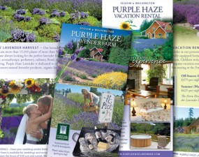 Purple Haze Lavender Farm brochure