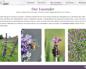 Victor's Lavender Website