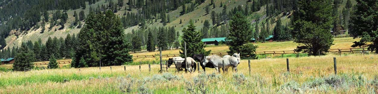 Dude Ranch Websites