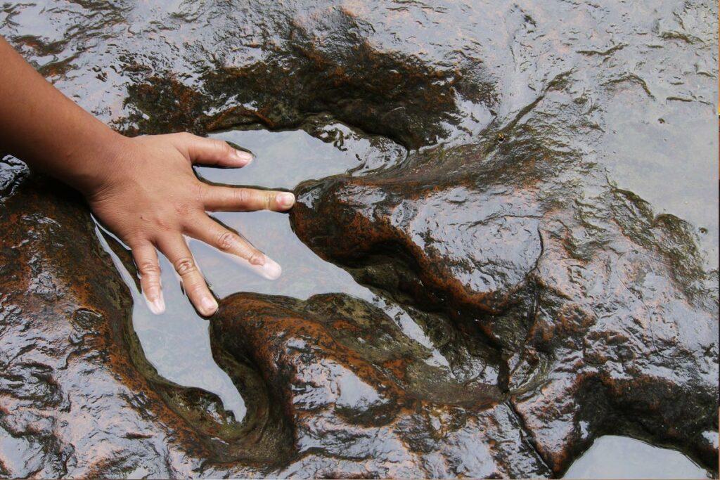 child touching a dinosaur footprint